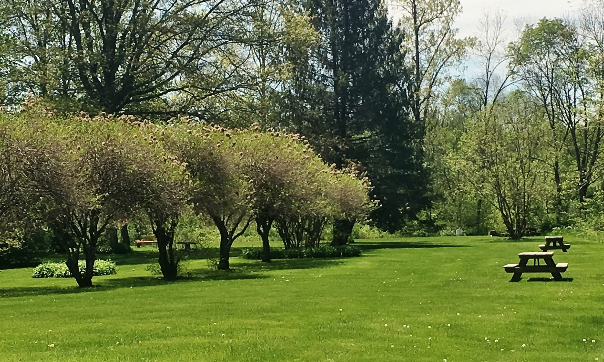 The Georgi Park Lawn