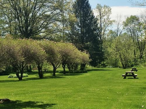 georgi park lawn spring